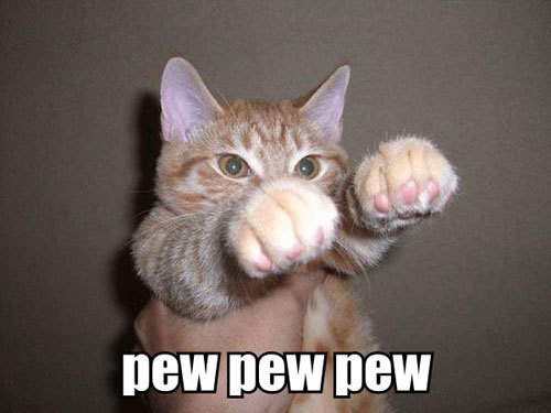 Funny-Cat-Pictures-cats-935656_500_375.jpg